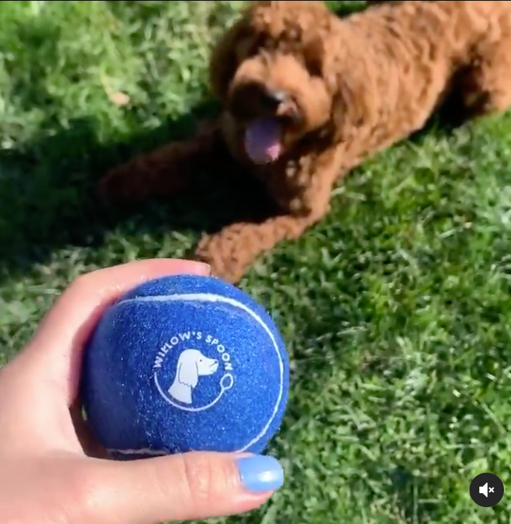Willow's Spoon branded ball